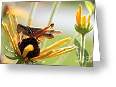 Grasshopper Antena Up Greeting Card