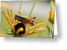 Grasshopper Antenna Down Greeting Card