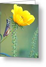 Grasshopper Be Still Greeting Card