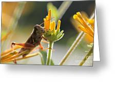 Grasshopper Delight Greeting Card
