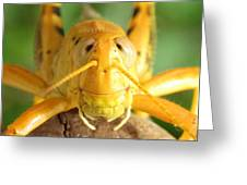 Grasshopper Grin Greeting Card