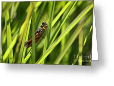 Grasshopper In Grass Greeting Card