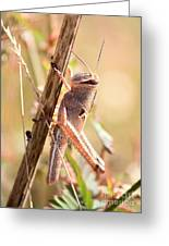 Grasshopper In The Marsh Greeting Card