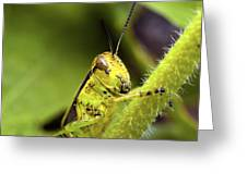 Grasshopper Macro 9402 Greeting Card