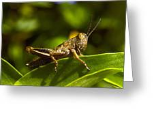 Grasshopper Macro Greeting Card