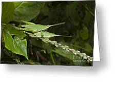Grasshopper Mating On Grass Leaf Greeting Card