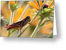 Grasshopper On Coneflower Stem Greeting Card