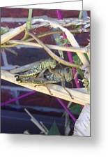 Grasshopper Piggyback Greeting Card