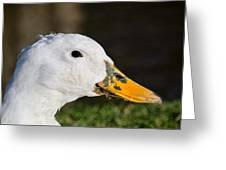 Grassy-bill Duck Greeting Card