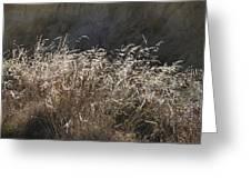 Grassy Knoll Greeting Card