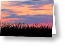 Grassy Sunset Greeting Card