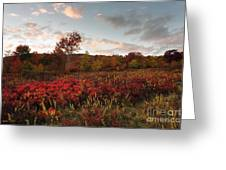 Graveyard Fields 2010 Greeting Card