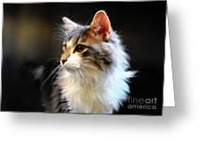 Gray And White Cat Greeting Card