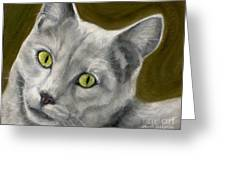 Gray Cat With Green Eyes Greeting Card