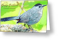 Gray Catbird Digital Art Greeting Card
