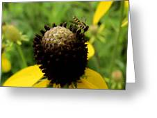 Gray Cone Flower Greeting Card