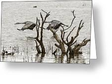 Gray Day At Whitewater Greeting Card
