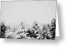 Gray December Winter Snow On Trees Photograph Greeting Card
