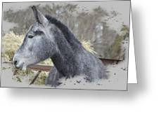 Old Gray Greeting Card