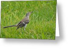 Gray-eyed Catbird II Greeting Card