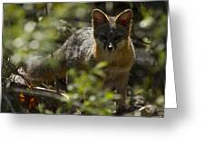 Gray Fox In The Woods Greeting Card