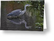 Gray Heron And Reflection Greeting Card