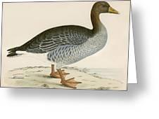 Gray Lag Goose Greeting Card