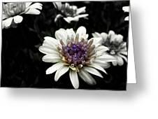 Gray Petals Greeting Card