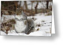 Gray Squirrel In Snow Greeting Card