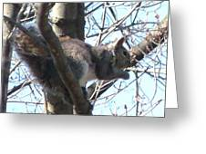 Gray Squirrel Nibbling  Greeting Card