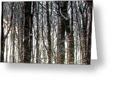 Gray Winter Grove Greeting Card