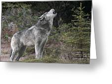 Gray Wolf Howling Endangered Species Wildlife Rescue Greeting Card