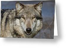 Gray Wolf Portrait Greeting Card