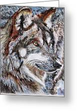 Gray Wolf Watches And Waits Greeting Card by J McCombie