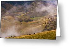 Grazing Above The Fog Greeting Card