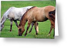 Grazing At Dusk Greeting Card