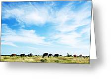 Grazing Cattle Greeting Card