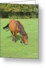 Grazing Chestnut Pony Greeting Card