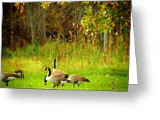 Grazing Geese Greeting Card