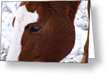 Grazing Horse  Greeting Card by Kimberly Maiden