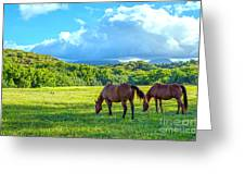 Grazing In Paradise Greeting Card