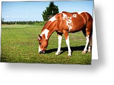 Grazing In Style Greeting Card