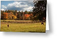 Grazing On The Farm Greeting Card by Joann Vitali