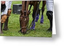 Grazing Polo Pony Greeting Card