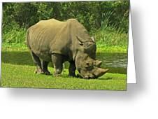 Grazing Rhino Greeting Card