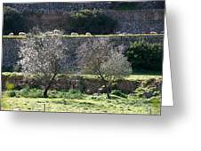Grazing Sheep In Terrace Landscape. Greeting Card
