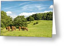 Grazing Summer Cows Greeting Card