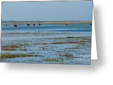 Grazing The River Greeting Card