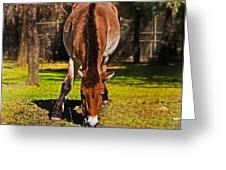 Grazing With An Attitude Greeting Card