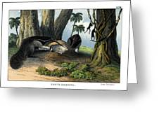 Great Anteater Greeting Card
